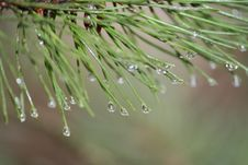 Free Water, Dew, Drop, Pine Family Royalty Free Stock Photography - 113241767