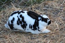 Free Domestic Rabbit, Rabbit, Fauna, Rabits And Hares Royalty Free Stock Photos - 113241958