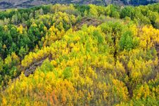 Free Ecosystem, Temperate Broadleaf And Mixed Forest, Vegetation, Wilderness Stock Image - 113242011