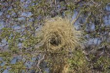 Free Bird Nest, Nest, Tree, Biome Stock Photography - 113242022