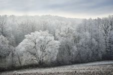Free Winter, Frost, Tree, Snow Stock Images - 113242084
