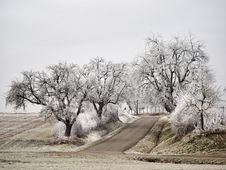 Free Tree, Winter, Woody Plant, Frost Royalty Free Stock Photo - 113242175