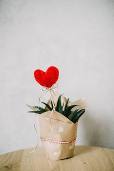 Free Red Heart Ornament And Aloe Vera Plant Covered With Paper Royalty Free Stock Images - 113294969