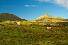 Free Cattles On Field Overlooking Mountains Under Blue Skt Stock Image - 113294991