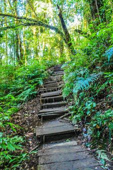 Free Landscape Photo Of Stair In The Forest Royalty Free Stock Photo - 113295015