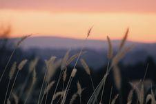 Free Shallow Focus Photography Of Beige Plants During Orange Sunset Stock Photo - 113295030