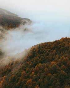 Free Bird S Eye Photography Of Foggy Forest Royalty Free Stock Photography - 113295107