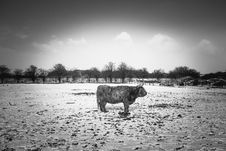 Free Grayscale Photo Of Animal Royalty Free Stock Photos - 113295108