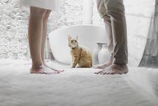 Free Photo Of A Tabby Cat Between People Royalty Free Stock Photography - 113349617