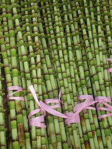 Free Grass Family, Grass, Bamboo, Crop Stock Photography - 113372462