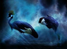 Free Water Bird, Beak, Feather, Darkness Royalty Free Stock Photos - 113372568