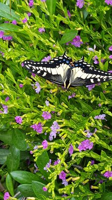 Free Butterfly, Plant, Moths And Butterflies, Flower Stock Photography - 113372672
