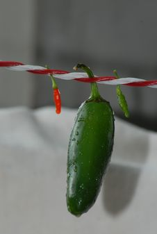 Free Chili Pepper, Bell Peppers And Chili Peppers, Plant, Serrano Pepper Stock Images - 113372734