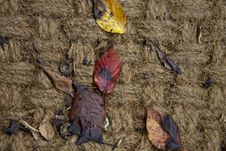 Free Leaf, Soil, Wood, Geology Stock Image - 113372811