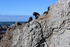 Free Rock, Promontory, Coast, Cliff Royalty Free Stock Photos - 113372858