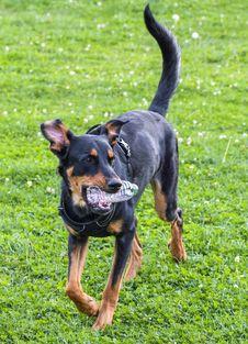 Free Dog, Dog Breed, Dog Like Mammal, Mammal Stock Image - 113372911