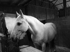 Free Horse, White, Black, Black And White Stock Photo - 113373080