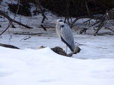 Free Fauna, Bird, Snow, Wildlife Royalty Free Stock Photo - 113373275
