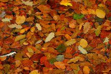 Free Leaf, Autumn, Deciduous, Mixture Stock Image - 113373391
