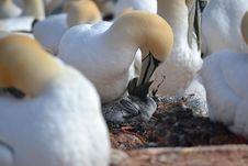 Free Bird, Fauna, Beak, Water Bird Stock Image - 113373461