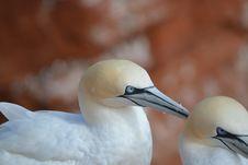 Free Bird, Beak, Fauna, Close Up Stock Image - 113373471