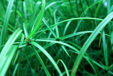 Free Green, Grass, Vegetation, Grass Family Royalty Free Stock Photography - 113373667