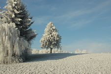 Free Winter, Frost, Sky, Tree Stock Images - 113373674