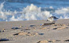 Free Bird, Fauna, Shore, Sky Royalty Free Stock Photo - 113373695