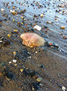 Free Water, Seashell, Sand Stock Photos - 113373713