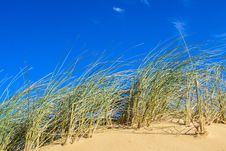 Free Ecosystem, Sky, Grass, Grass Family Royalty Free Stock Image - 113373716