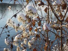 Free Branch, Snow, Winter, Tree Stock Image - 113373781