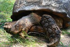 Free Turtle, Tortoise, Reptile, Terrestrial Animal Stock Photos - 113374053