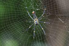 Free Spider, Arachnid, Spider Web, Invertebrate Stock Photo - 113374070