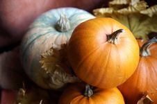 Autumn Still Life With Pumpkins Royalty Free Stock Photos