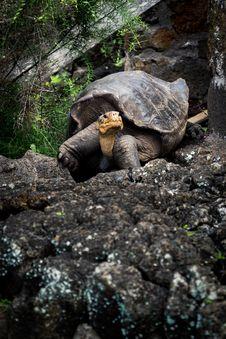 Free Tortoise On Rock Stock Photos - 113416823
