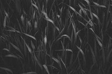 Free Grayscale Photography Of Grass Royalty Free Stock Photography - 113416907