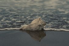 Free Grey Conch Shell On Shore Stock Photo - 113472710