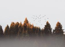 Free Flock Of Birds Royalty Free Stock Image - 113472716