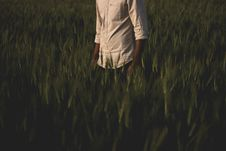 Free Man Surrounded Grass Stock Photography - 113472792