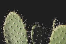 Free Close-up Photo Of Three Green Cactus Plants Royalty Free Stock Photography - 113472887