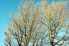 Free Leafless Tree Under Blue Sky At Daytime Royalty Free Stock Photography - 113472907