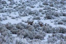 Free Herd Of Deer On Bush Royalty Free Stock Photos - 113472908