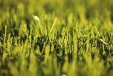 Free Shallow Focus Photography Of Grass Stock Images - 113472934