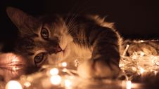 Free Gray Tabby Cat Lying On White String Lights Royalty Free Stock Photography - 113472977