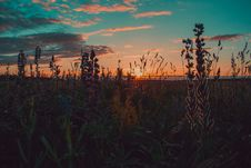 Free Brown And Green Grass During Sunset Royalty Free Stock Photos - 113473118
