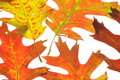 Free Fall Leaves Royalty Free Stock Photos - 11358688
