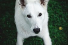 Free Photography Of A White Dog Royalty Free Stock Photography - 113539857