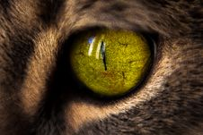 Free Macro Photography Of Green Cat S Eye Royalty Free Stock Photo - 113539875