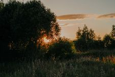 Free Grass Field And Trees During Sunset Stock Photos - 113539983