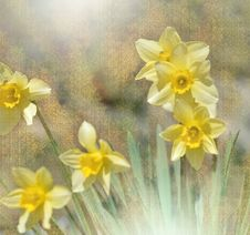 Free Beautiful Macro Shot Of Magic Flowers. Border Art Design. Magic Light. Easter Flowers Lily Daffodil.Conceptual Image. Royalty Free Stock Images - 113594639